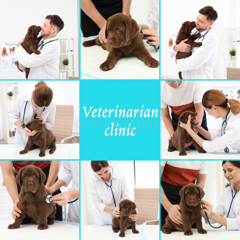 Collage med doktorer och husdjur i klinik fotografering för bildbyråer