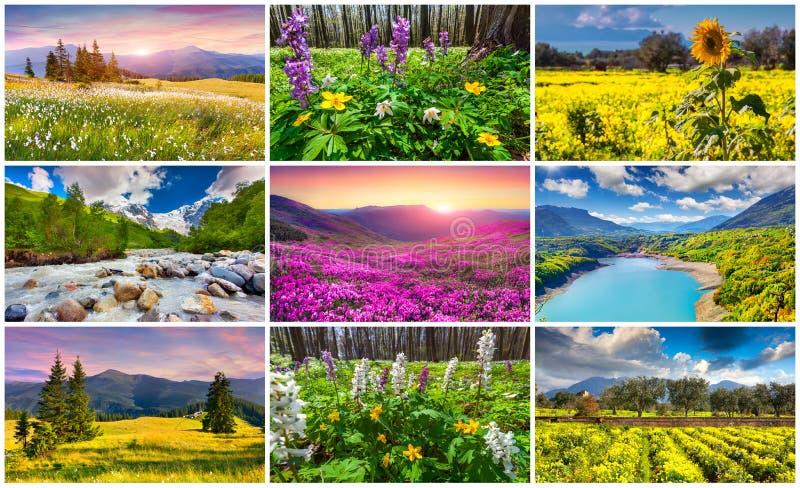 Collage med 9 färgrika sommarlandskap arkivfoton