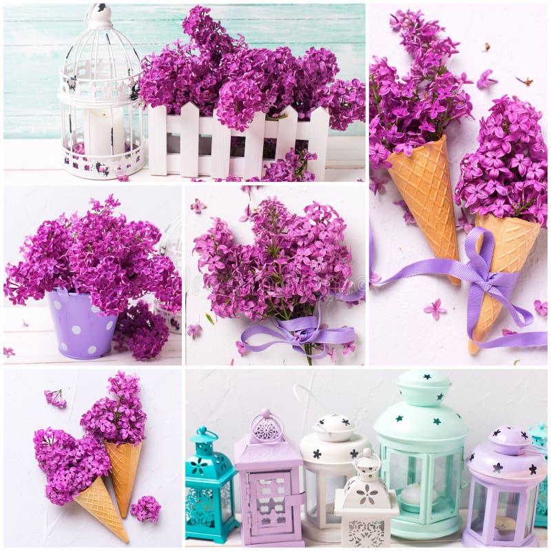 Collage med violetta lila blommor royaltyfria bilder