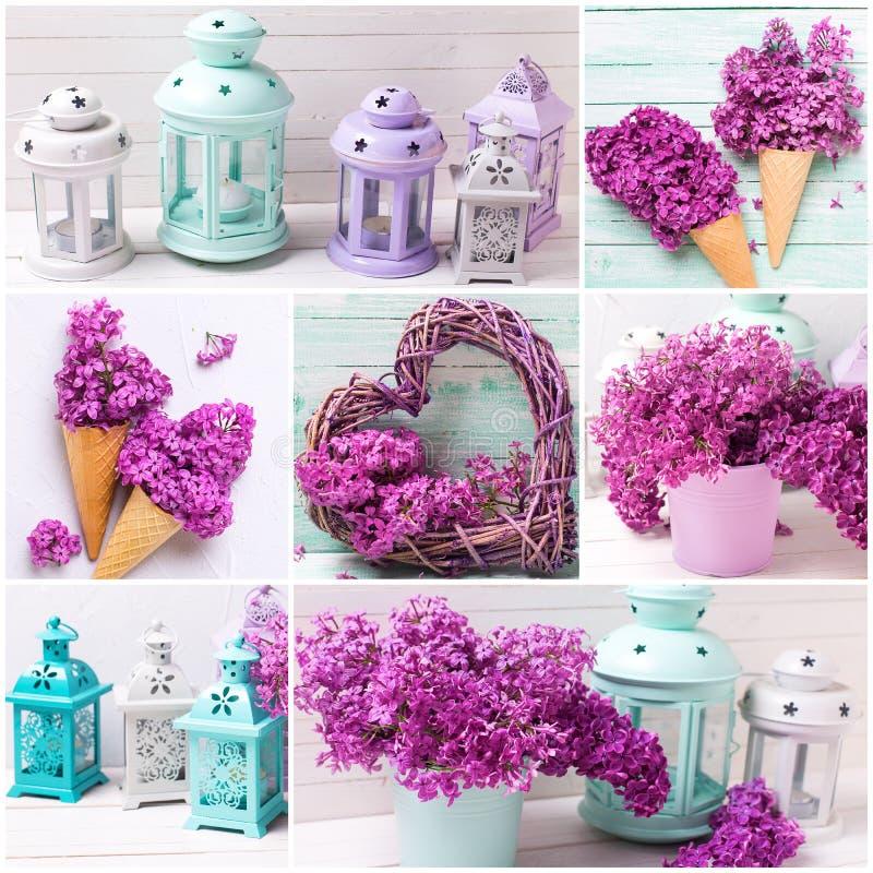 Collage med violetta lila blommor fotografering för bildbyråer