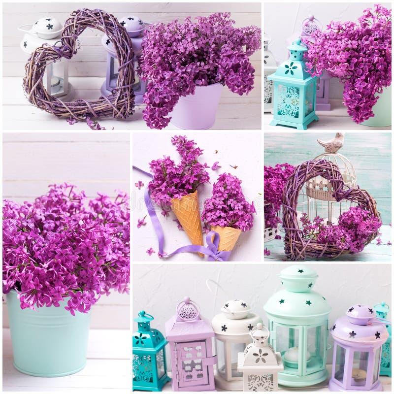 Collage med violetta lilablommor för vår royaltyfria bilder