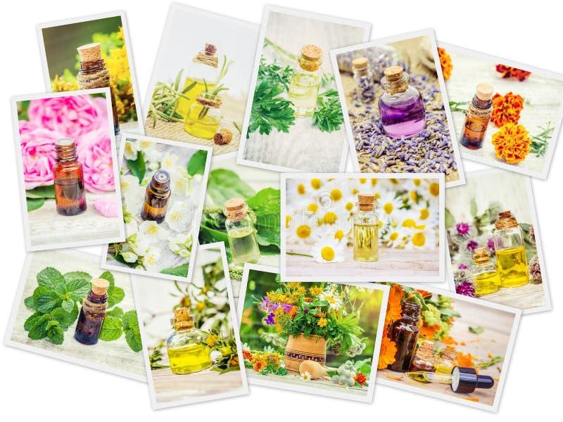 Collage medicinal de las hierbas imagenes de archivo