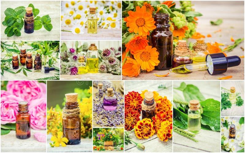 Collage medicinal de las hierbas fotografía de archivo libre de regalías
