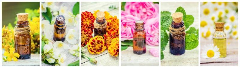 Collage medicinal de las hierbas imagen de archivo