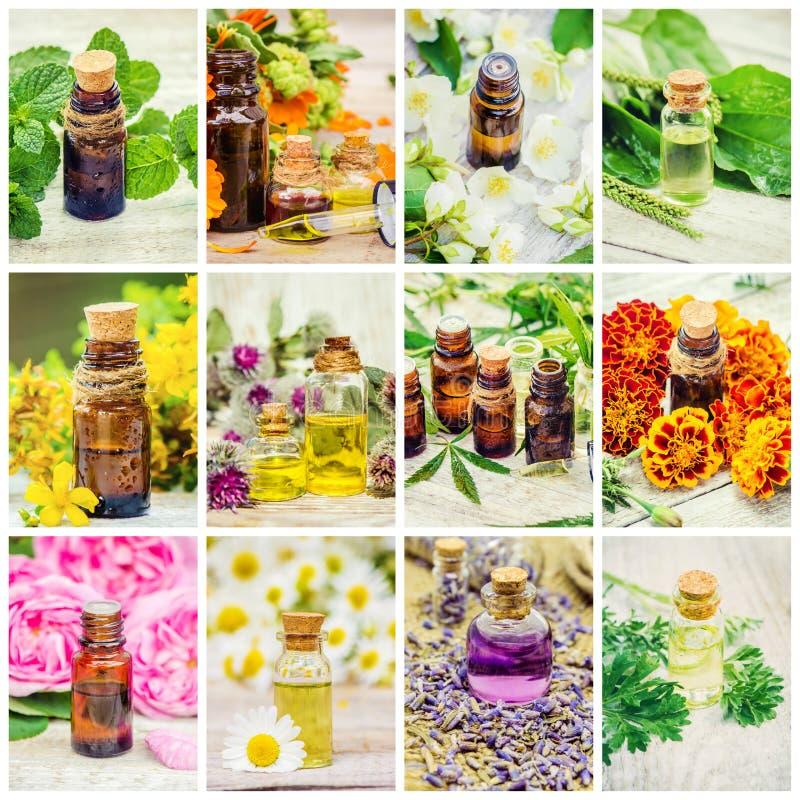 Collage medicinal de las hierbas fotos de archivo libres de regalías