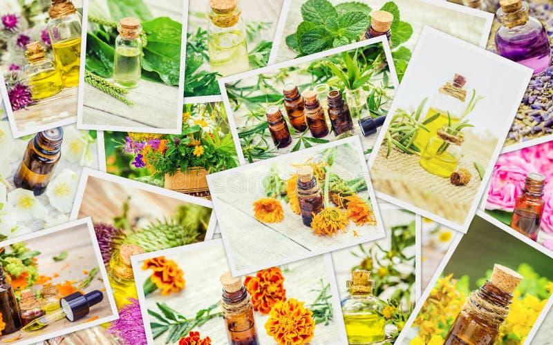 Collage medicinal de las hierbas fotos de archivo