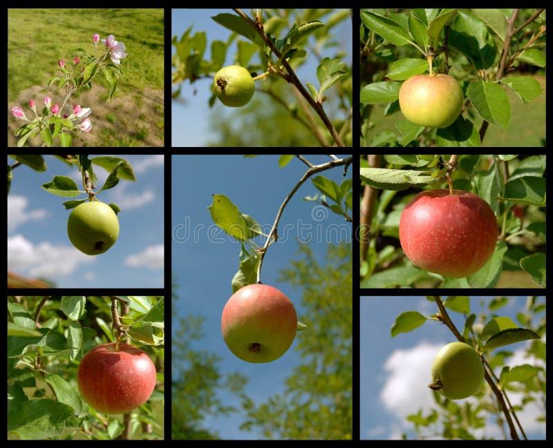 Collage met appelen stock foto's