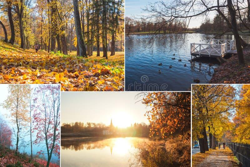 Collage met mooie meningen van de nevelige herfst stock afbeeldingen