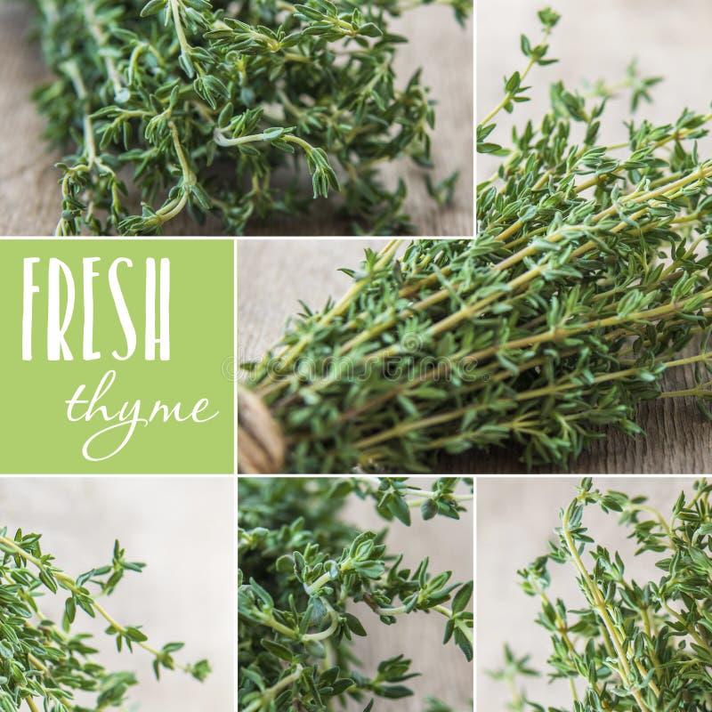 Collage met thyme, vers kruid voor het koken stock foto