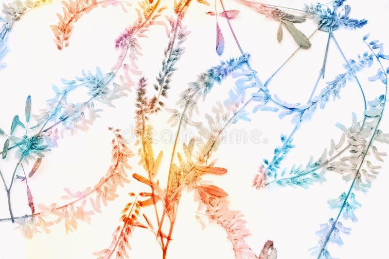 Collage mit den trockenen gepressten Blumenblumenblättern, Herbarium Hintergrund für das Scrapbooking Ein Saison, Herbstbeschaffe lizenzfreie abbildung
