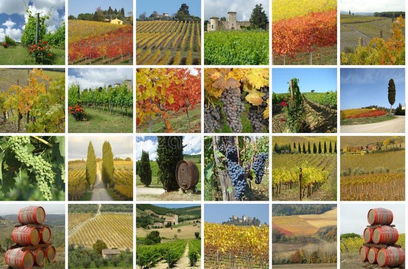 Collage mit schöner Landschaft der Weinberge stockbild