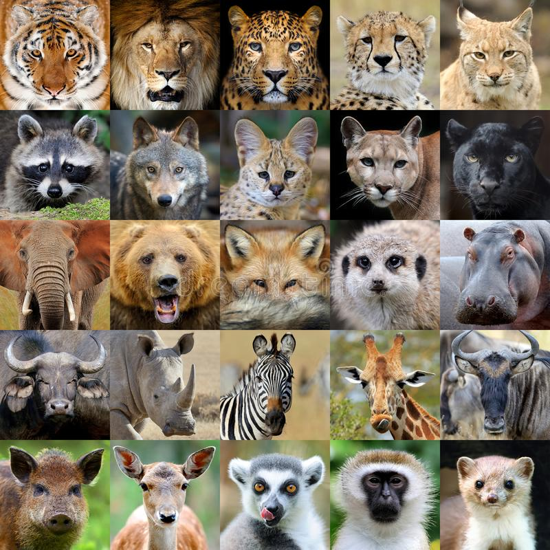 Collage mit Tierporträt lizenzfreies stockfoto