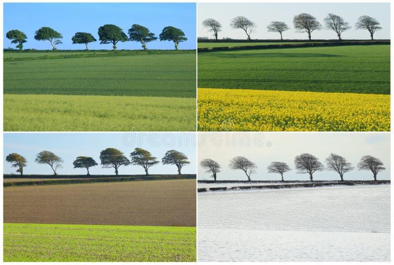 Collage mit vier Jahreszeiten lizenzfreie stockfotos