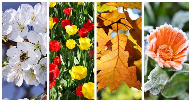 Collage mit vier Jahreszeiten: Frühling, Sommer stockfotografie