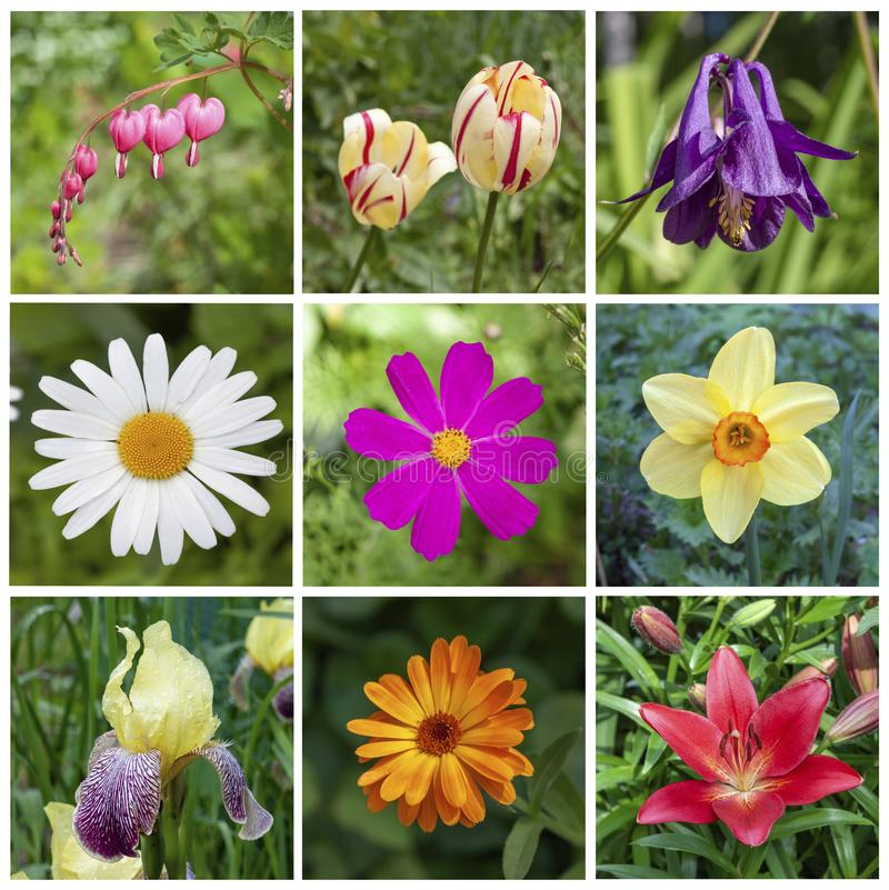 Collage of nine beautiful vibrant garden flowers. Square shape royalty free stock photos