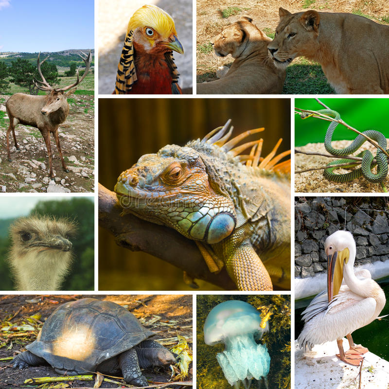 Free Collage Of Animals Royalty Free Stock Photography - 19607547
