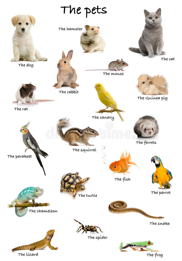 Free Collage Of Pets And Animals In English Royalty Free Stock Photos - 22629198