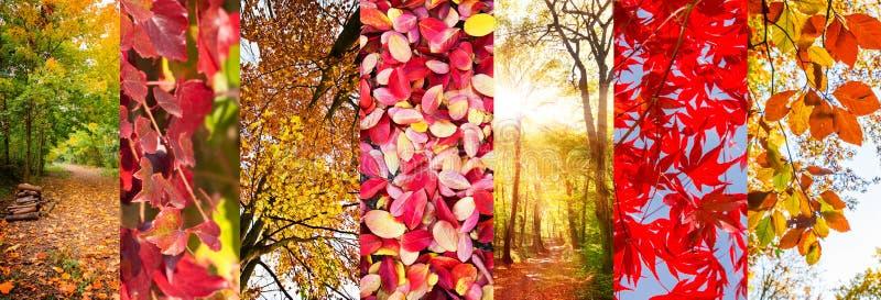 Collage panoramico delle foglie di autunno e dei paesaggi della natura fotografia stock libera da diritti