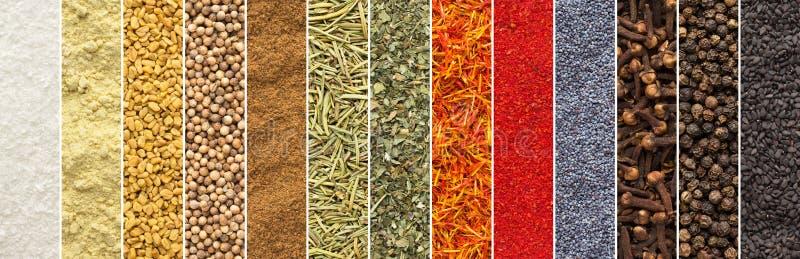 Collage panoramico delle spezie e del fondo isolato erbe struttura di condimento per progettazione di imballaggio per alimenti ra fotografia stock