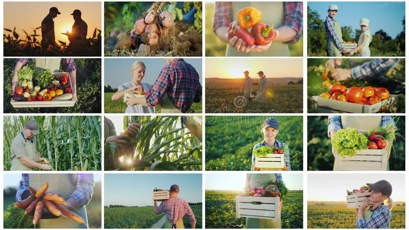 Collage of photos from farming activities and harvesting stock image
