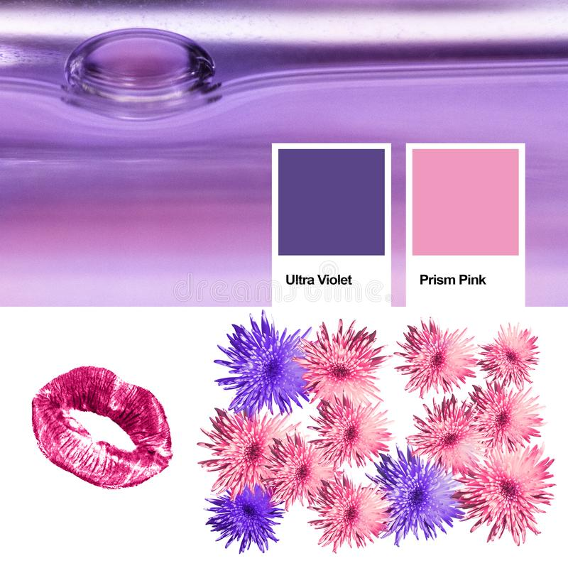 Collage of photos trendy color of the year 2018 ultra violet, kindred spirits with Prism Pink. Floral pattern blossom flowers, pri royalty free stock image