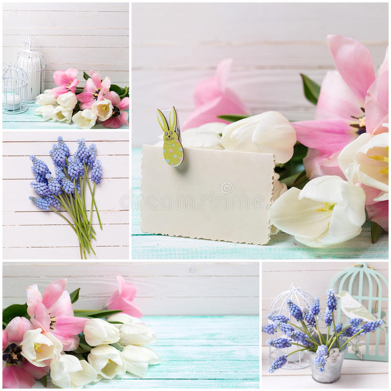 Collage from photos with with white and pink tulips and muscari stock images