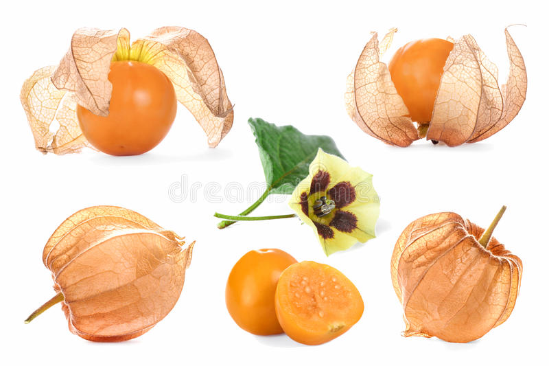 Collage With Physalis Royalty Free Stock Photography