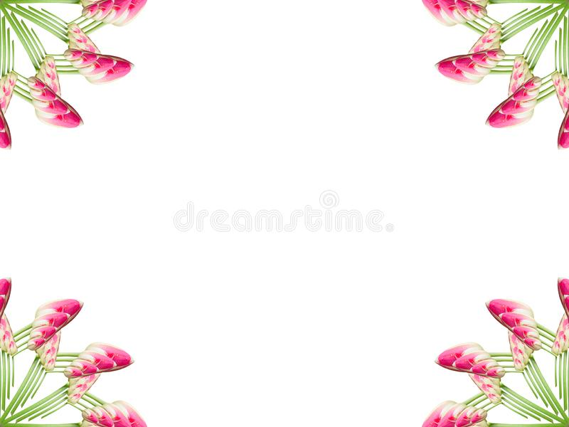 Collage of Pink beautiful tulip flowers on a white background. royalty free illustration