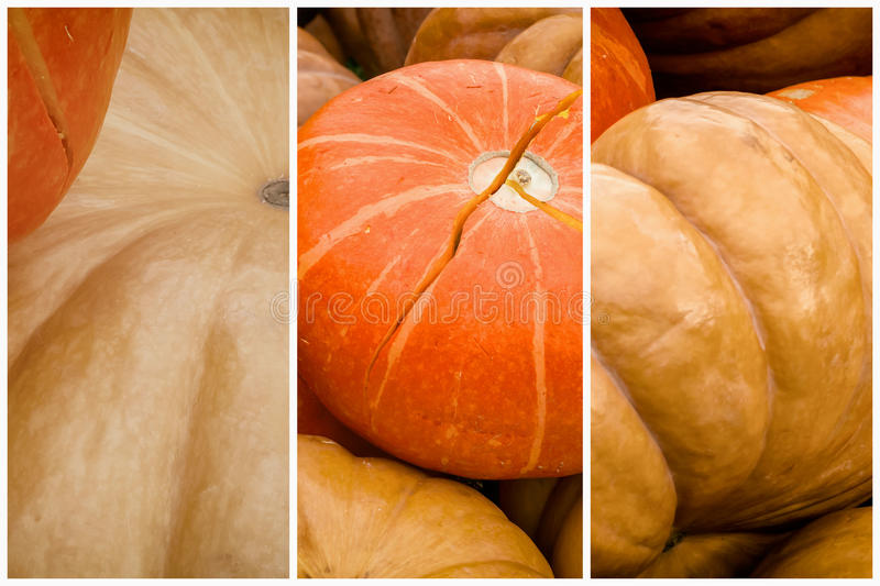 Collage of Pumpkin close-up. Thanksgiving Day, Halloween festive decoration and concept. Autumn, fall background royalty free stock photos