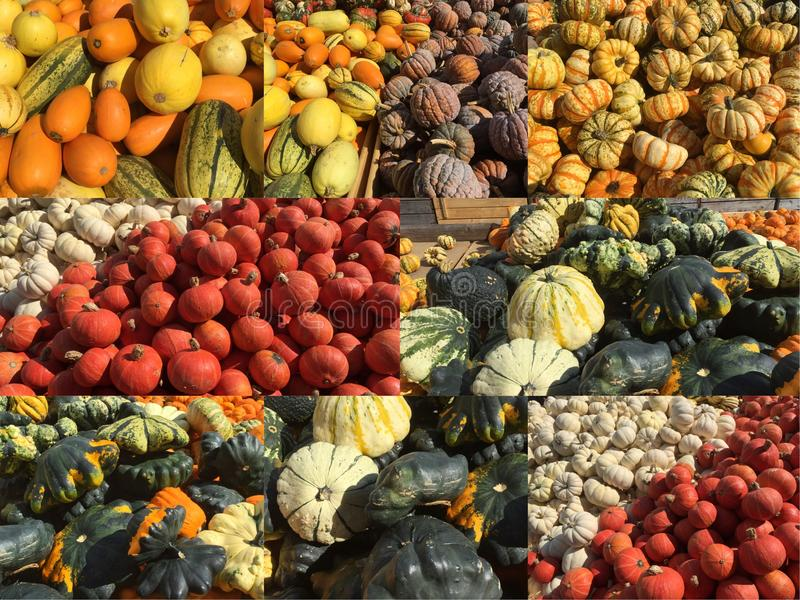 Collage with pumpkins stock images