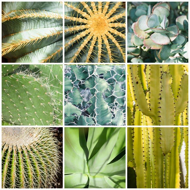 Collage quadrato dei cactus verdi immagine stock