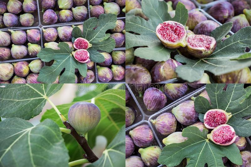 Collage of ripe and growing fig fruits. Collage from 4 photos of growing fruit on the fig branch and fig fruits in the plastic boxes for sale on the greek royalty free stock photos