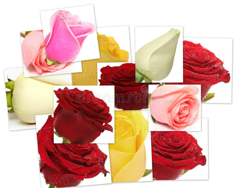 Collage of roses from photos royalty free stock photos