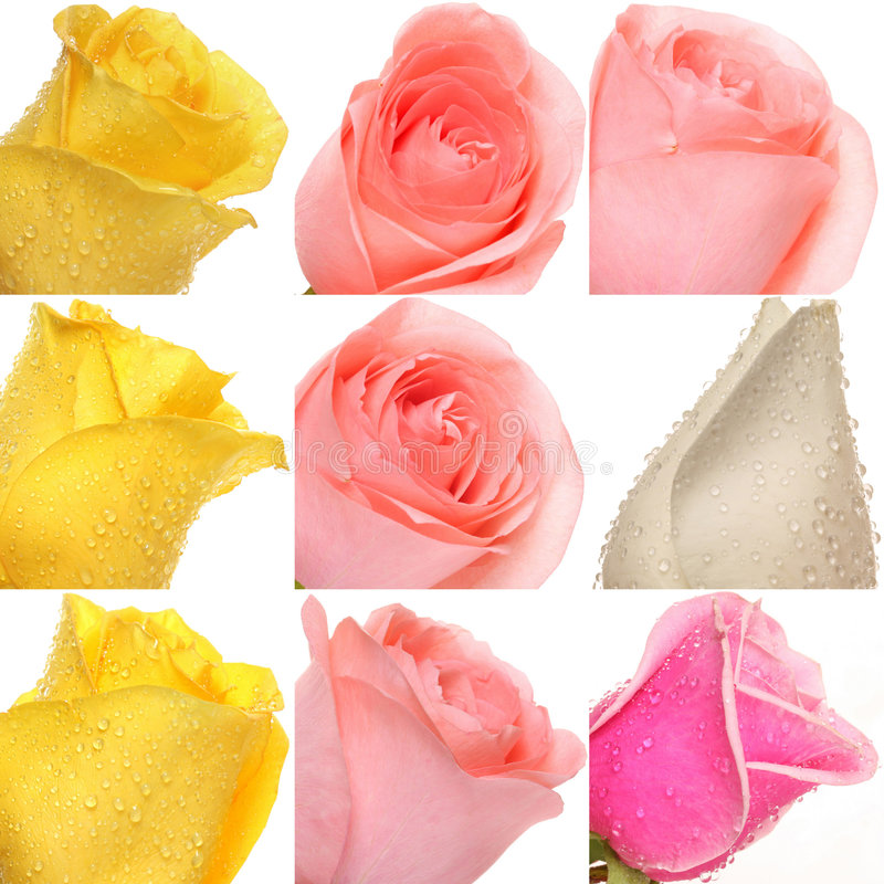 Collage of roses from photos stock photos