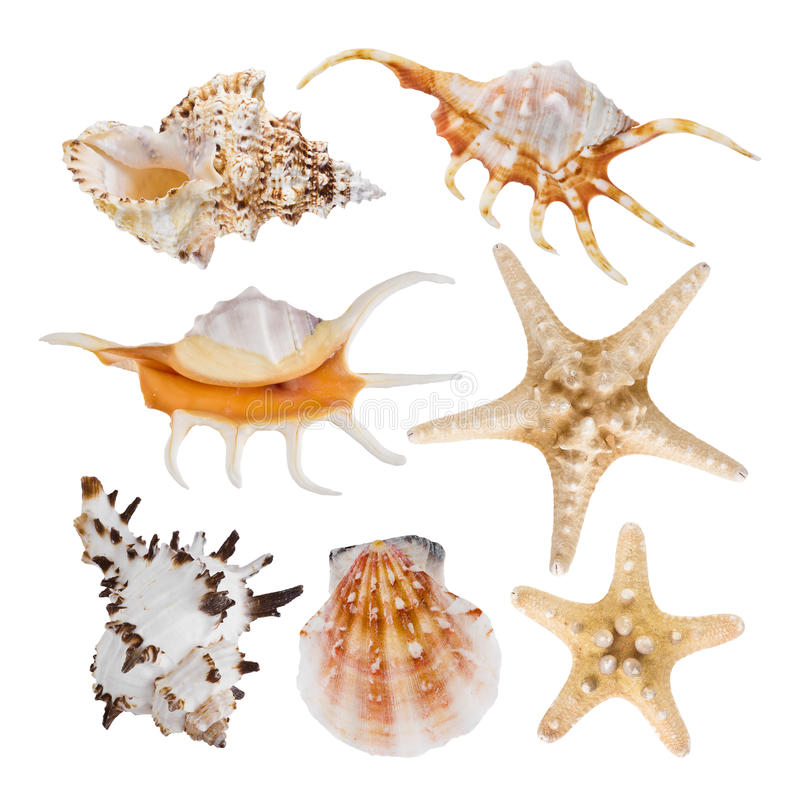Collage of sea shells isolated on white background royalty free stock photography