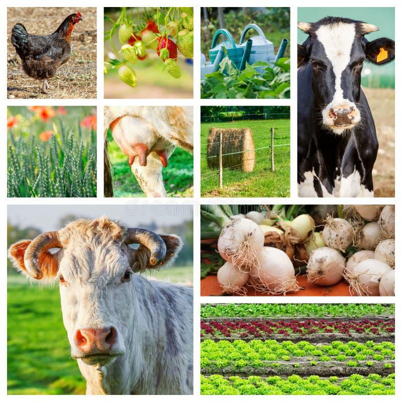 Collage som föreställer flera lantgårddjur och jordbruksmark royaltyfri fotografi