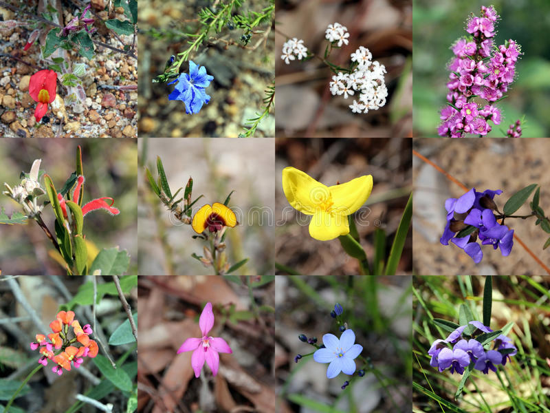 Collage Of  South West Australian Native Plants Stock Photo