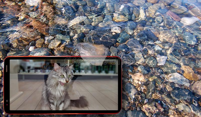 Collage of sunny jellyfish floating in water above Black sea stones and cell phone displaying cat on screen stock photo