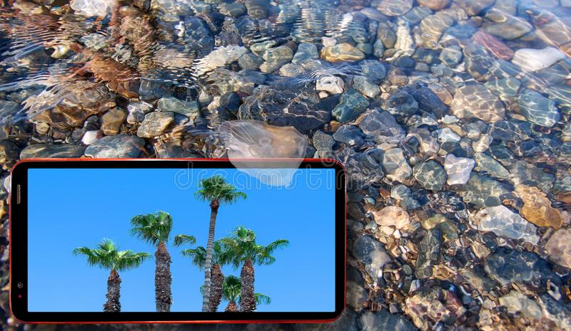 Collage of sunny jellyfish floating in water above Black sea stones and cell phone displaying sunny green palm trees royalty free stock images