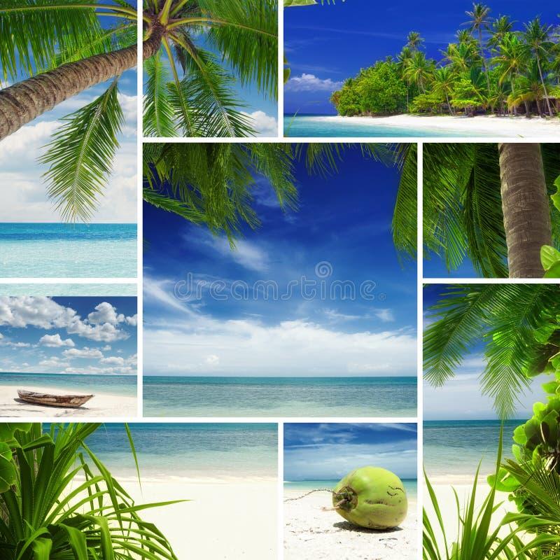 Mélange tropical photo libre de droits