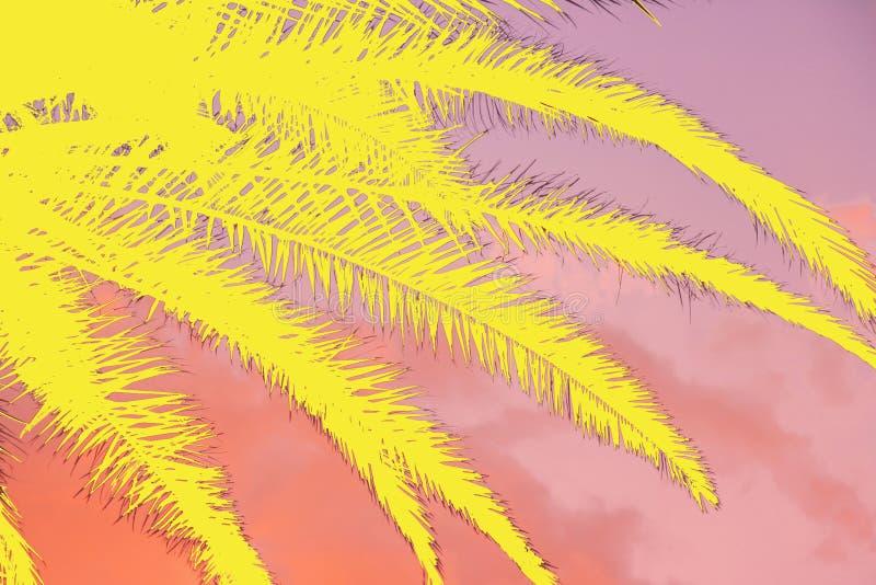 Collage tropicale del tramonto e del fondo vivo delle foglie di palma immagini stock libere da diritti