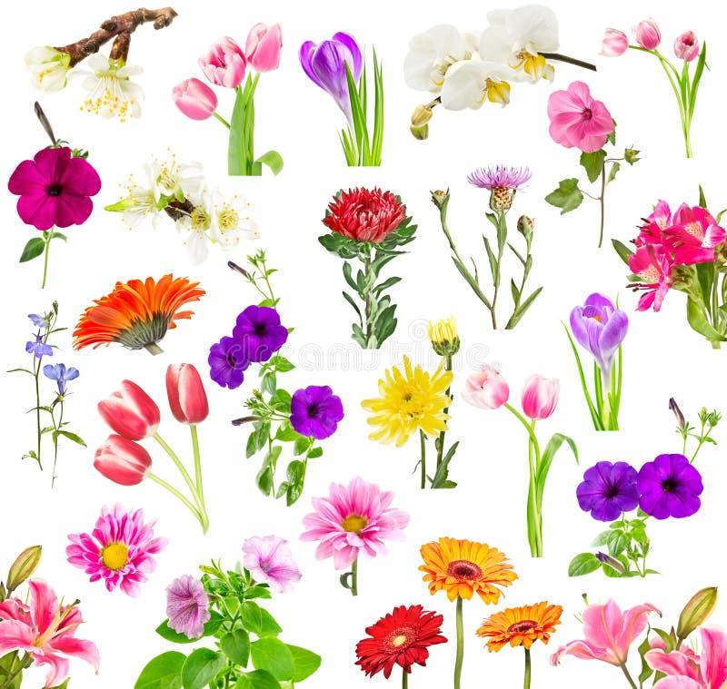 Collage van bloeiende bloemen stock foto