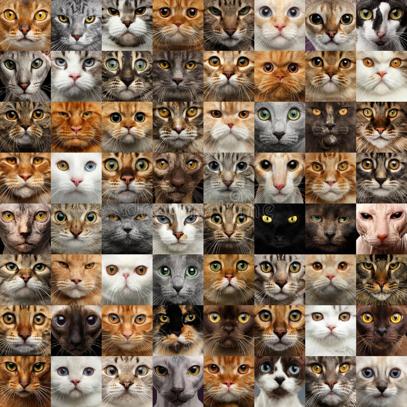 Collage van 64 Cat Faces royalty-vrije stock afbeeldingen