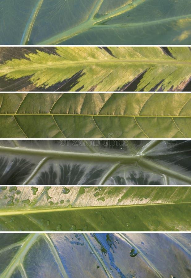 Collage van de bladeren van tropische installaties stock fotografie
