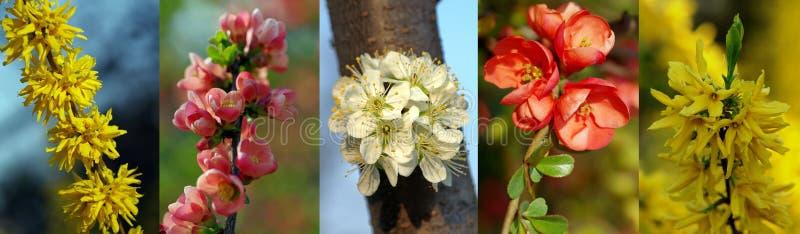 Collage van de lentebloemen royalty-vrije stock afbeelding