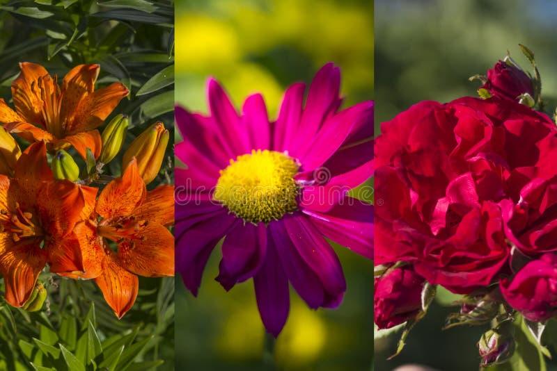 Collage van gekleurde en helder bloeiende bloemen in de strook stock foto's