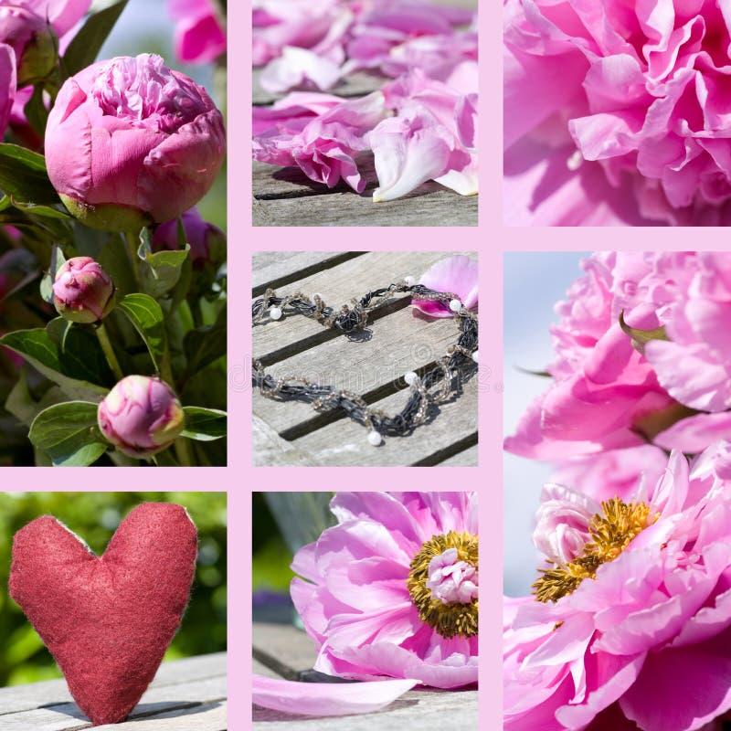 Collage van pioenen in roze royalty-vrije stock fotografie