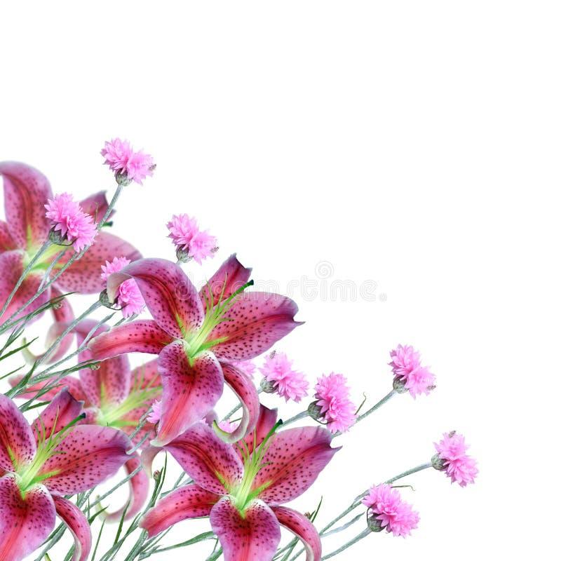 Collage van roze bloemen royalty-vrije stock afbeelding