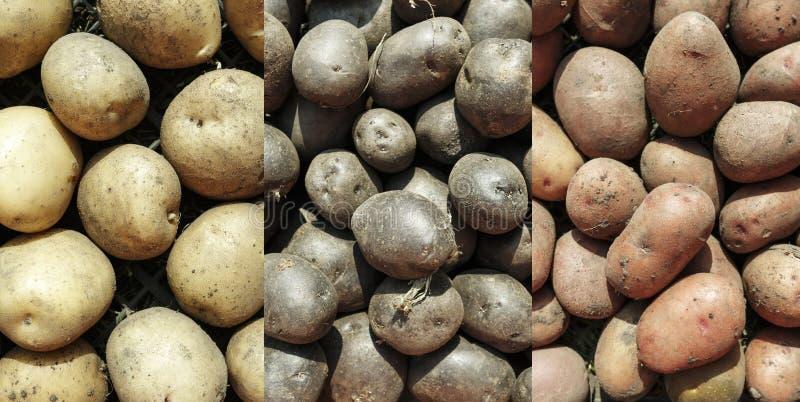 Collage van verschillende soorten aardappels stock foto's