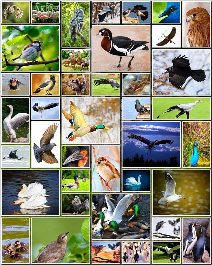 Collage van vogels stock foto's